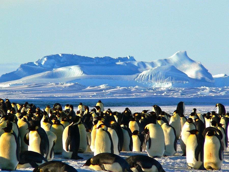 pingvini_manji