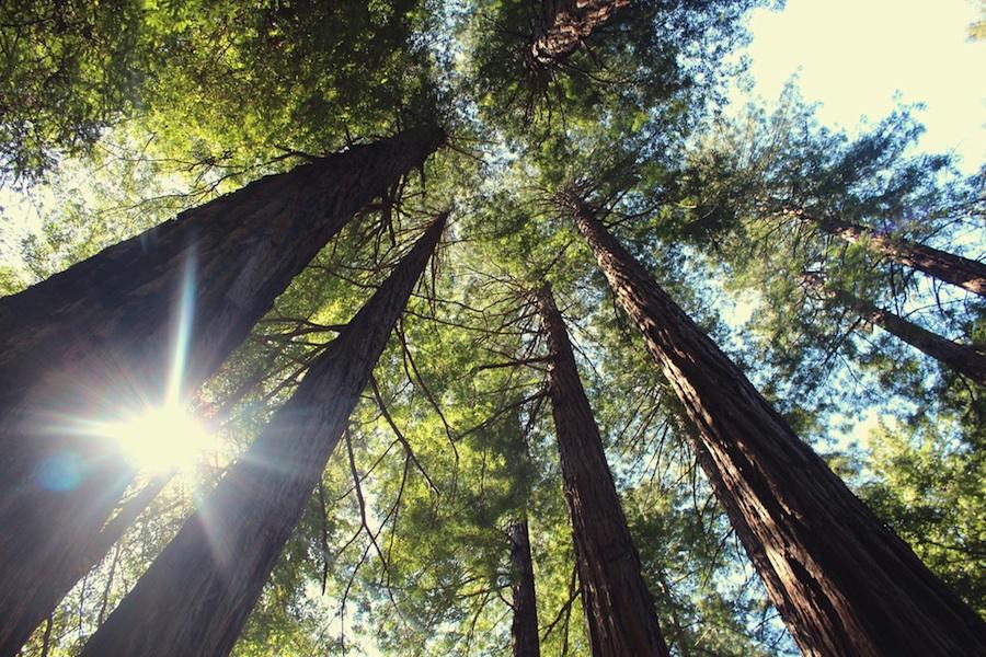 drvece_mala
