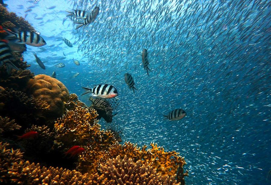 koraljni-greben-mala