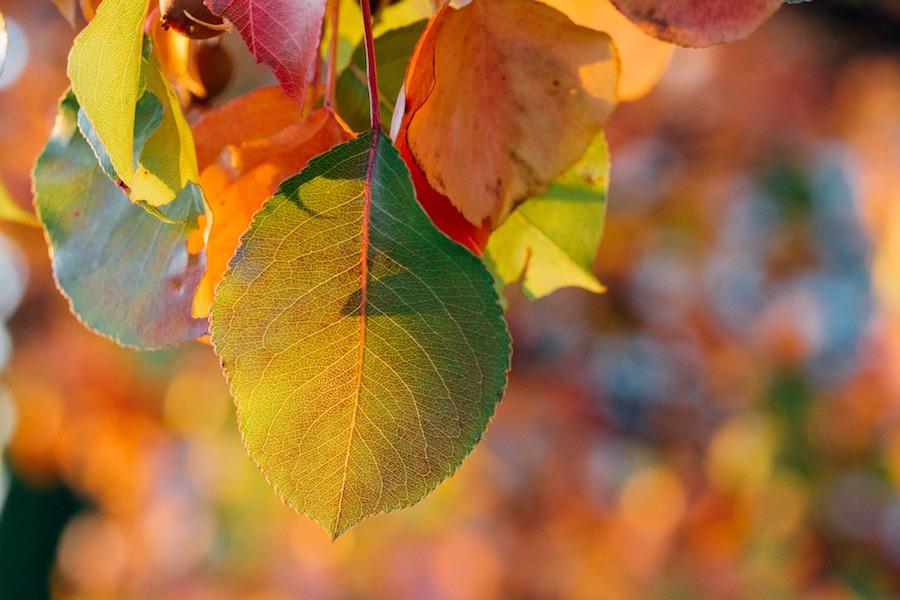 Početak jeseni