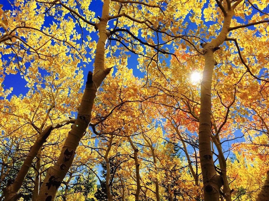 jesen_mala